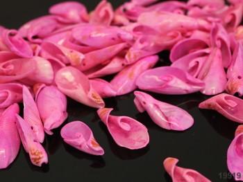 Růžové mušle spirály, bal. 10ks