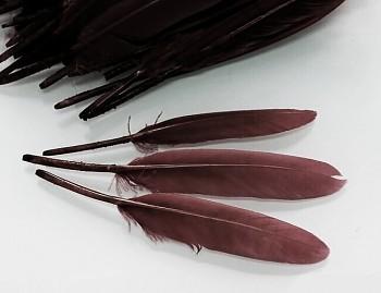 Kachní peří pírka letky HNĚDÉ , bal. 10ks (kopie)
