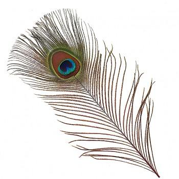 Paví pero přírodní pírka 50cm, bal. 1ks